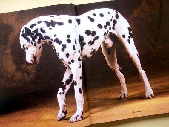 dog'slife_4.jpg