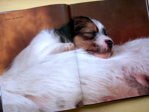 dog'slife_5.jpg
