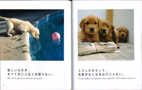 dog teach us2.jpg