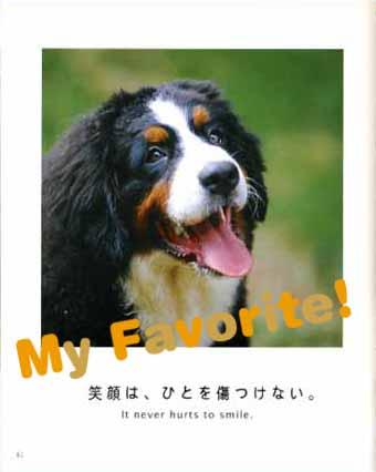 dog teach us3.jpg