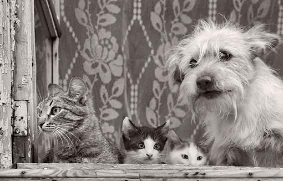 dog&cats.jpg