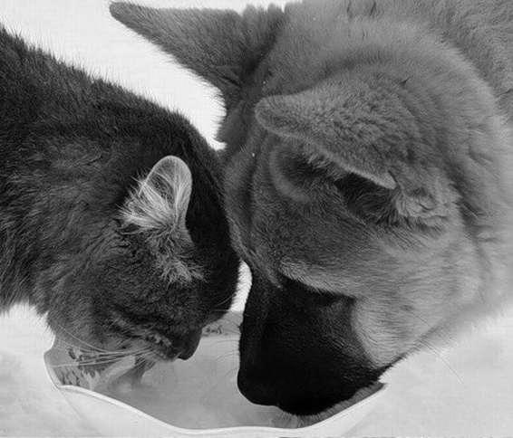 dogcat_3.jpg
