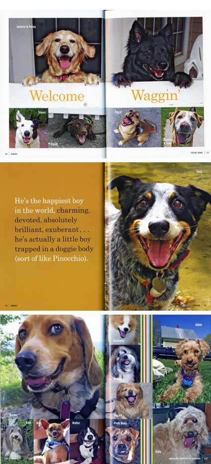 dogjoy_in.jpg
