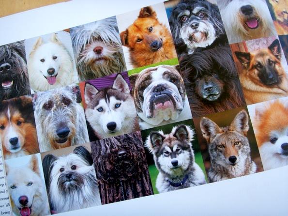 dogs_human_2.jpg