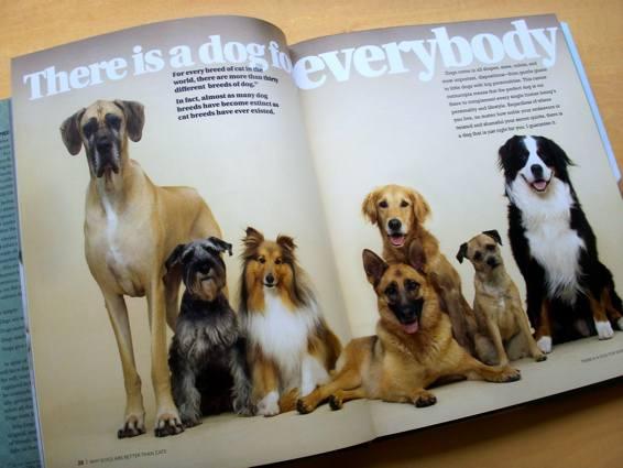 dogscats_3.jpg