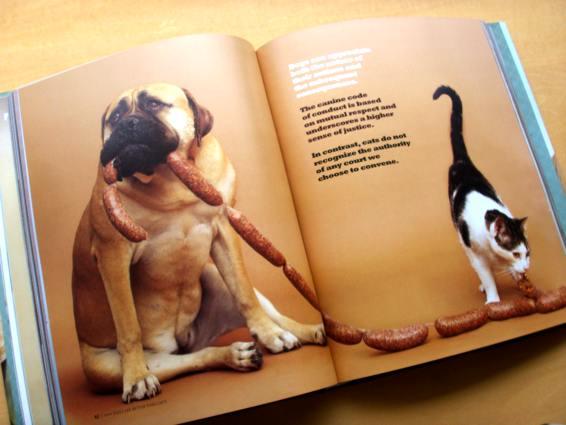dogscats_4.jpg