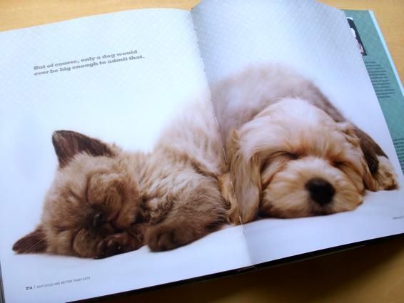 dogscats_8.jpg