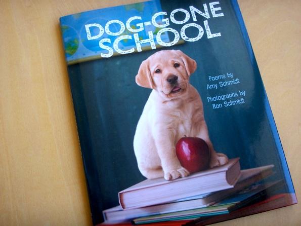 dogschool_1.jpg