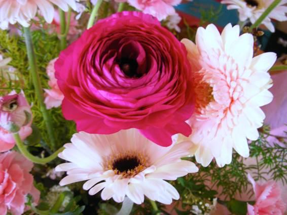 mayflower_PICT1091.jpg