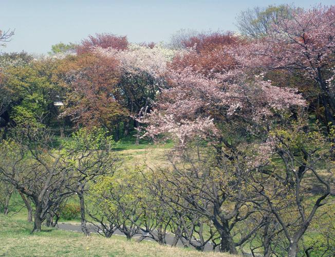 negishi_3.jpg
