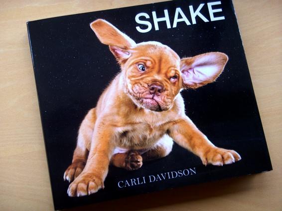 shake_1.jpg