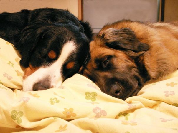 sleeping_sisters.jpg