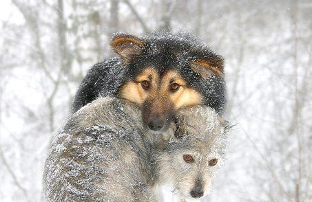 snowdog_4.jpg