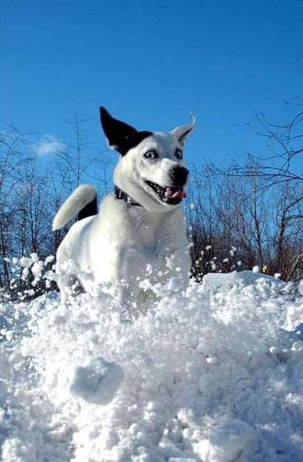 snowdogs_2.jpg