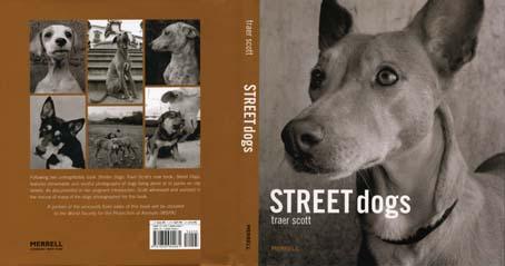 streetdog1.jpg