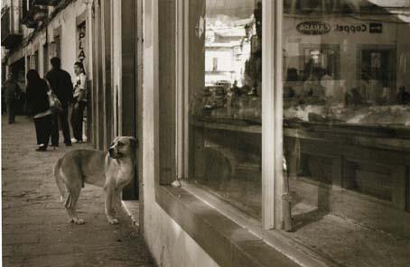 streetdog2.jpg