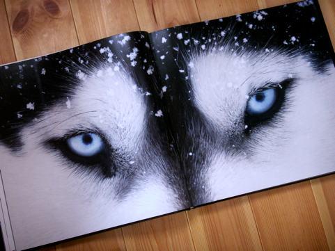 tim_dogs_03.jpg