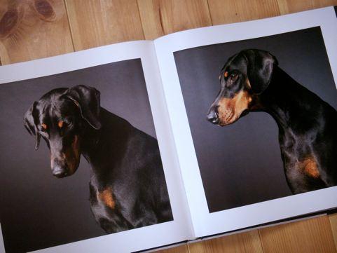 tim_dogs_06.jpg